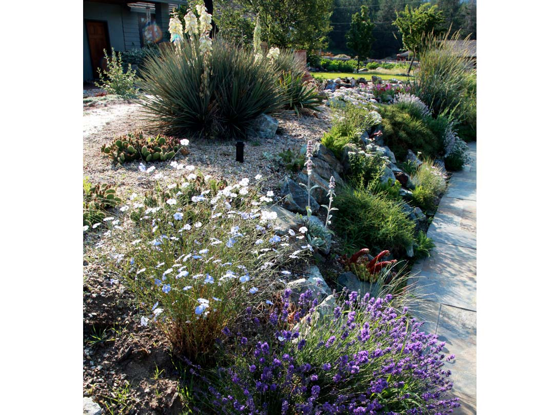 Xeriscape plantings on a sloped garden bed