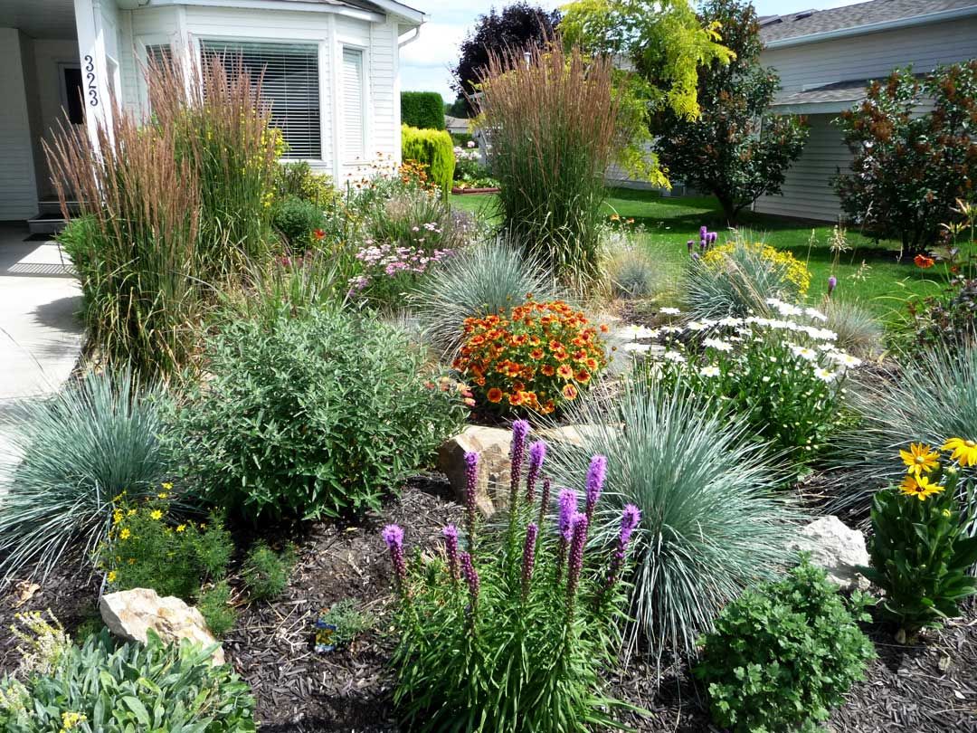 The Cook's roadside xeriscape with Grow-Low Sumac and Tiger Eyes Sumac