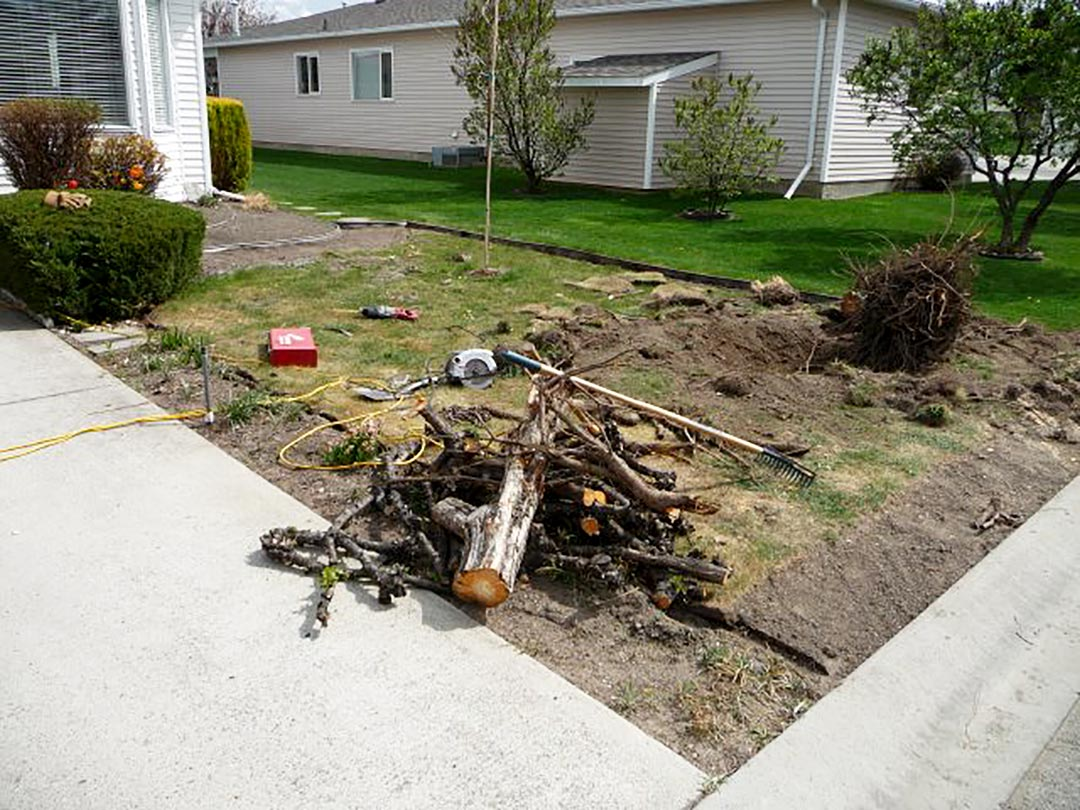 Tree removal for xeriscape project
