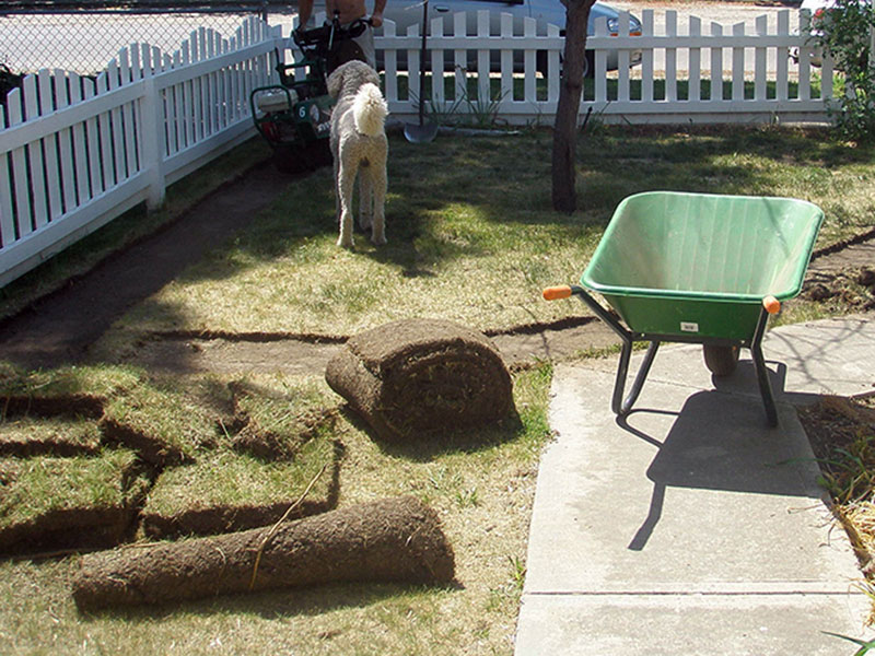 Removing the existing sod in Lisa's Garden xeriscape project