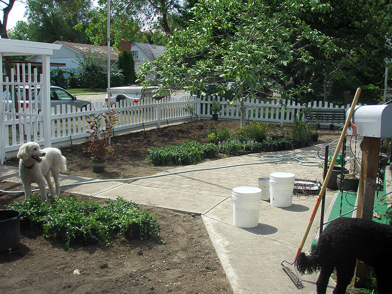 Planting begins in Lisa's xeriscape garden makeover