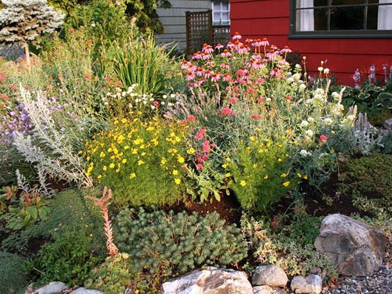 Sun-loving Xeriscape garden